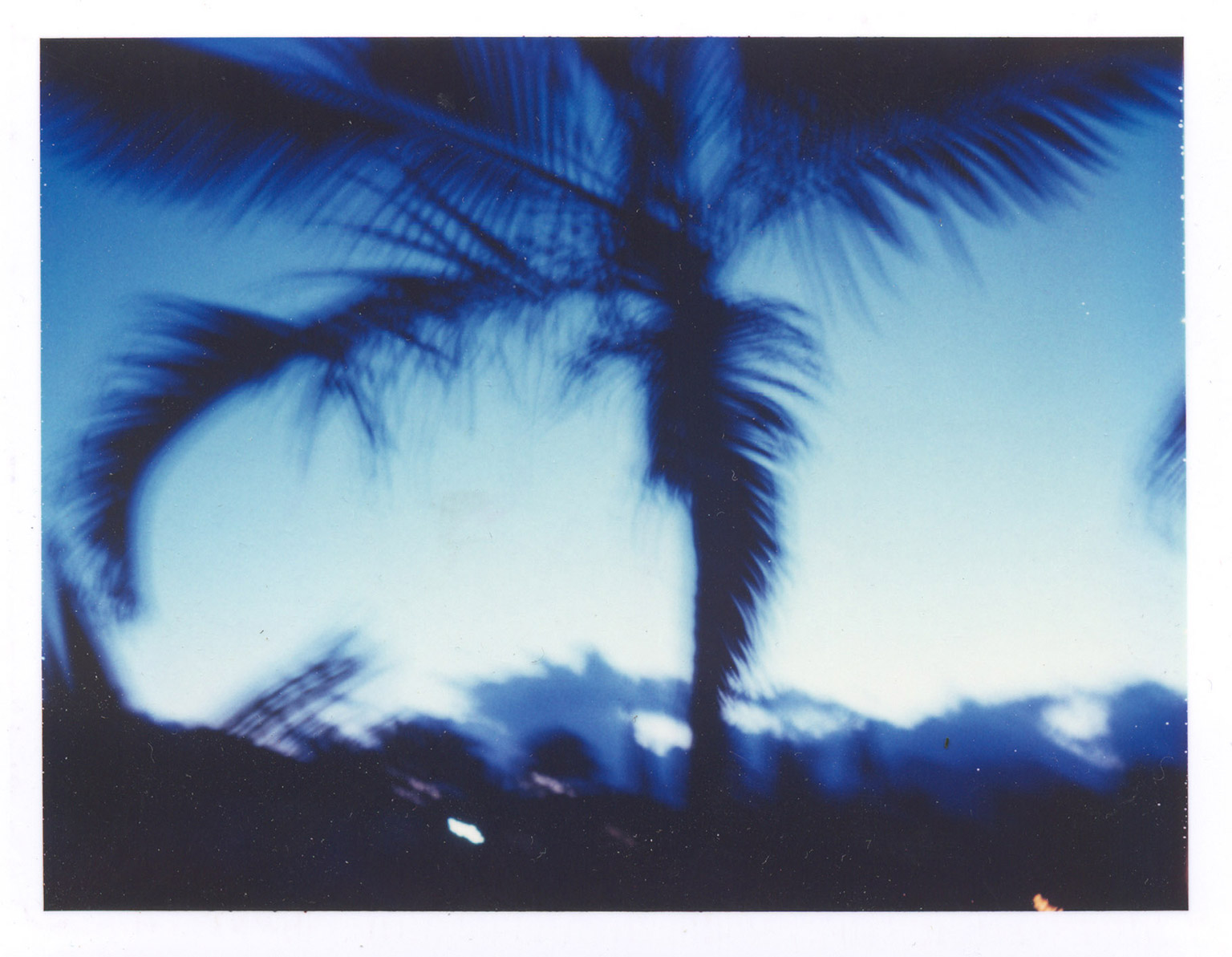 palm+blue