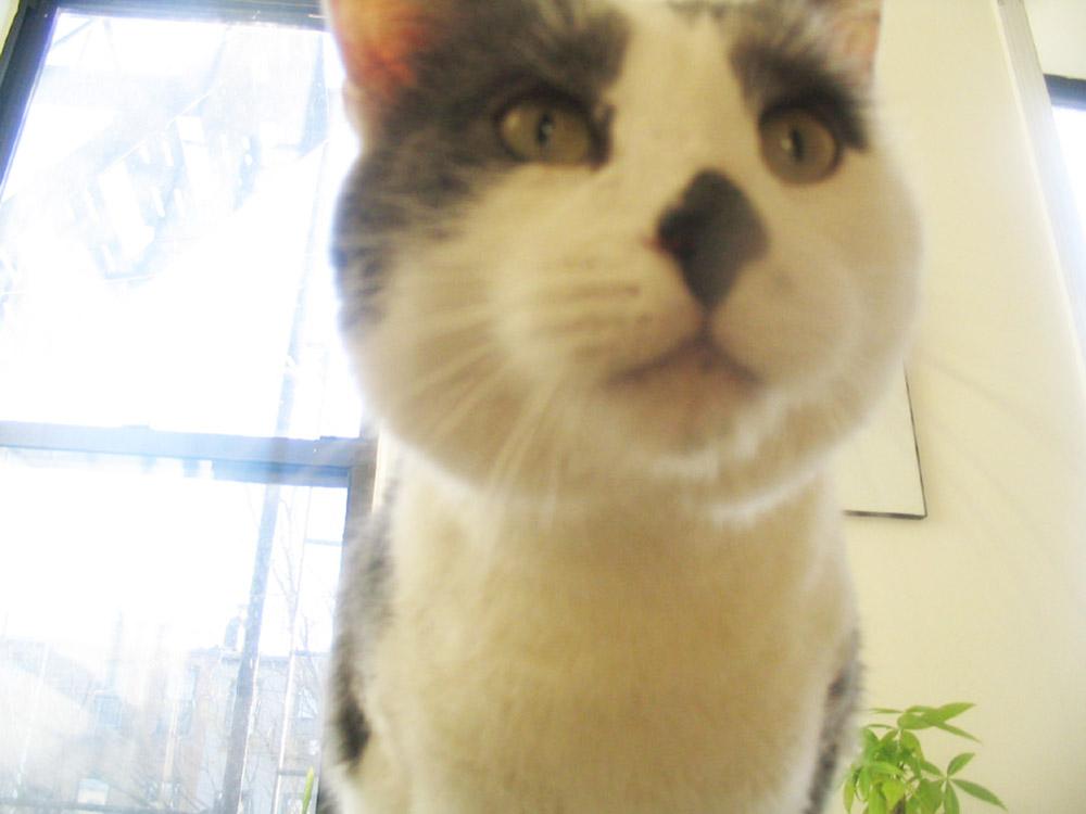 allister-cat