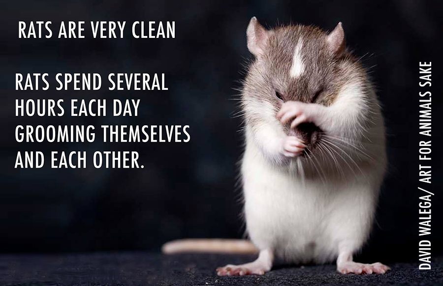 TRU_ratfacts_cleaning_small
