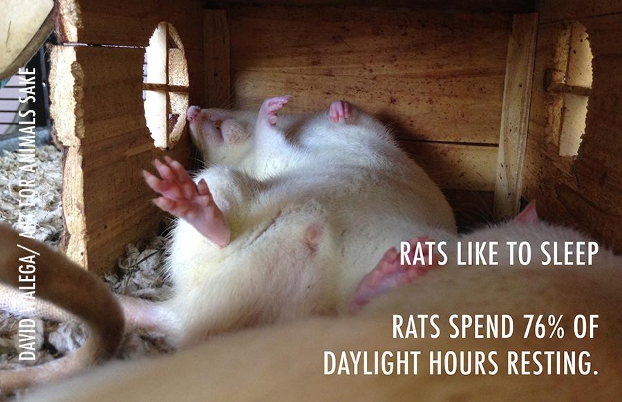 TRU_ratfacts_sleeping_small