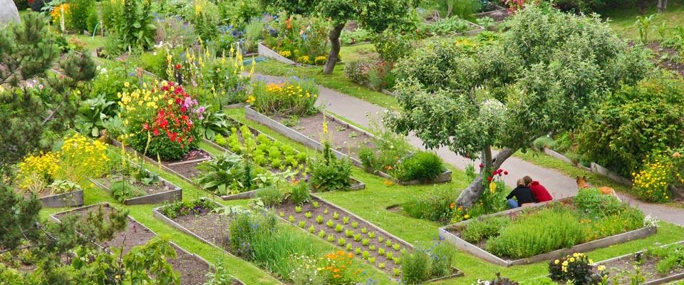 stanford-organic-gardens